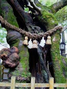 Sacred tree, Japan