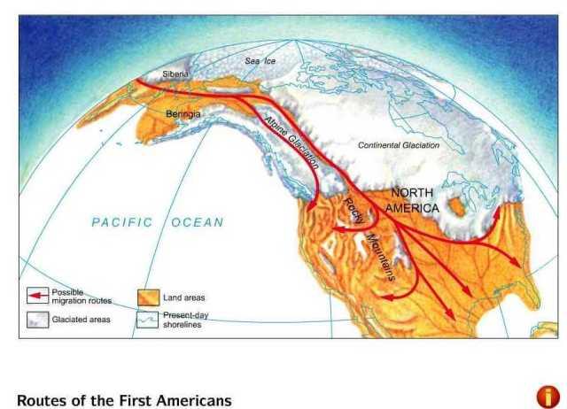 Homo beringamigration