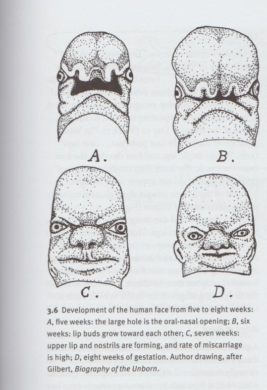 Olmec face images